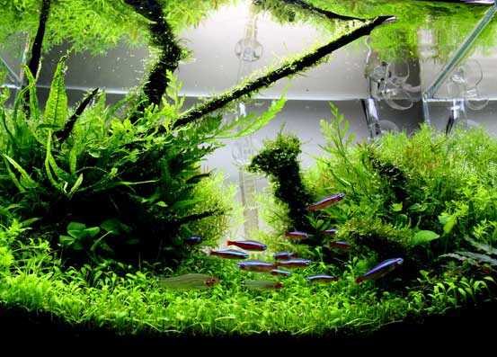 1 - Freshwater Aquarium Design Ideas