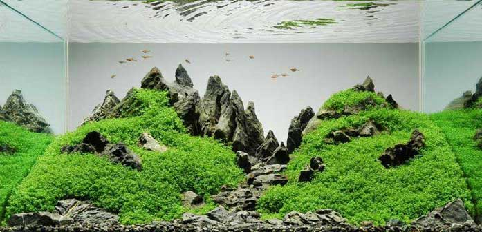 A guide to aquascaping the planted aquarium Aquarium landscape