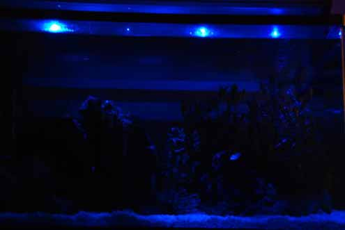 moonlights led blue for aquarium