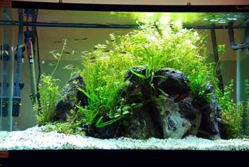 a guide to aquascaping the planted aquariumBeautiful Fish Tank Layout Design #9