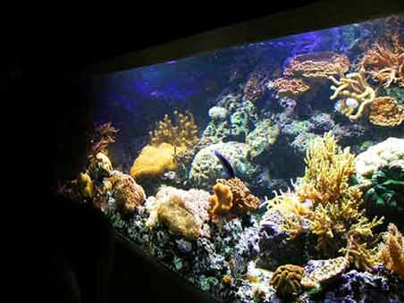 Setting Up A Marine Fowlr Aquarium
