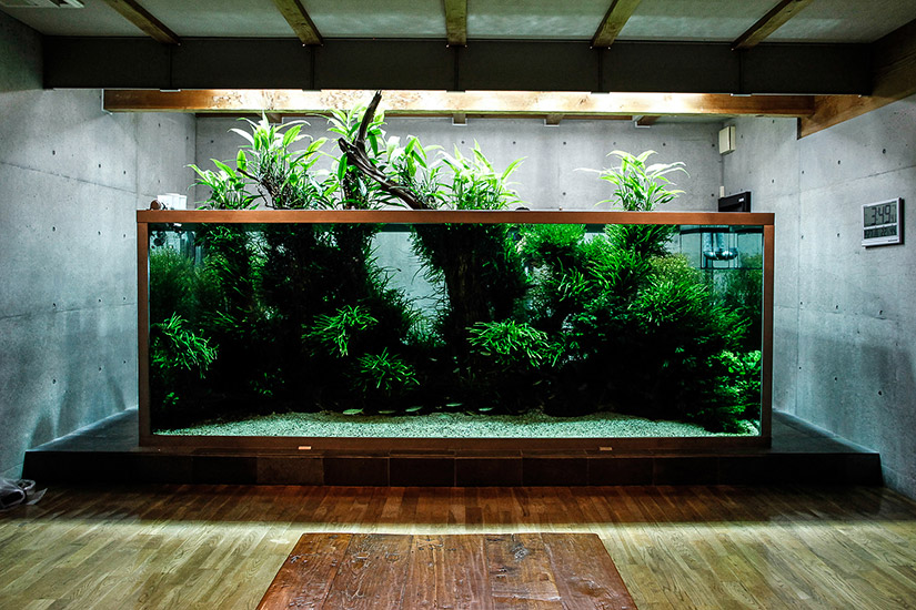 Iguwami Aquarium | The Simple Aquascape - AquariumInfo.org