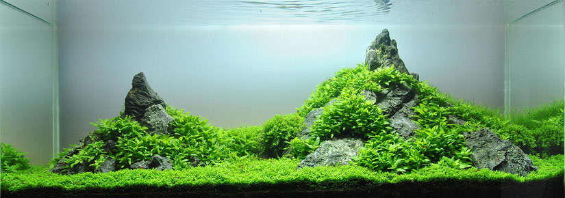Nice Aquascape Named U0027Tales Creeku0027 That Uses Seiryu Stones To Form A Beautiful  Mountain Scape