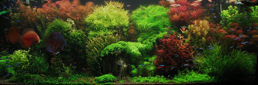 Aquascape named 'Tales Creek' that uses Seiryu stones to form a beautiful mountain scape.