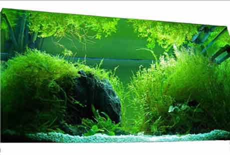 beautiful impressive aquascape