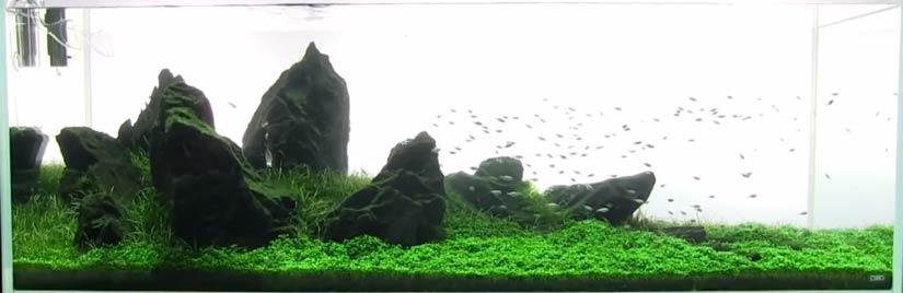 Shrimp Tank Guide Shrimp Setup And Care Aquariuminfo Org