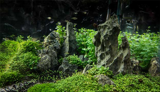small aquascaoe with hc substrate - Freshwater Aquarium Design Ideas